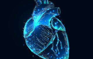 Spermidin - Hoffnung bei Herzschwäche